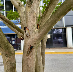 June 9, 2021 Dating on a Crape Myrtle