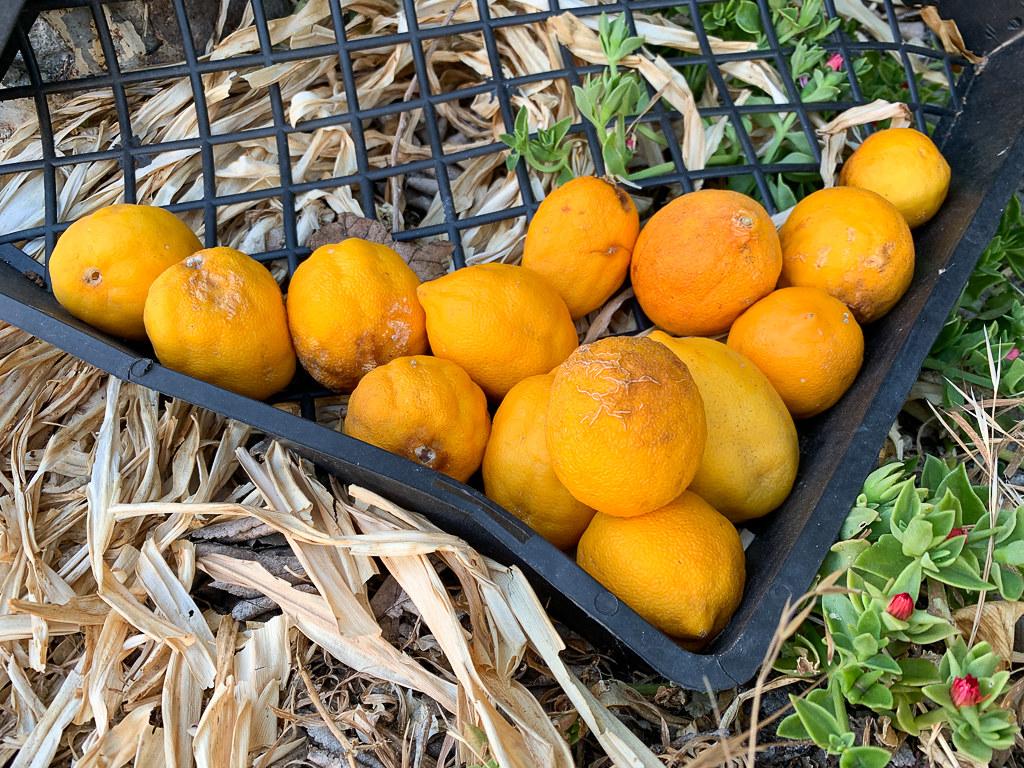 Oranges Past Their Prime