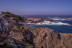 Scene from Point Lobos State Natural Reserve — Explore