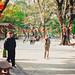 A walk in Renmin Park, Guangzhou China
