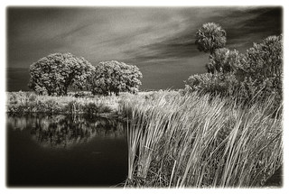 Lake Woodruff IR #53 2021; Trees in the Marsh