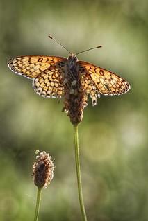 Papillon à contre jour
