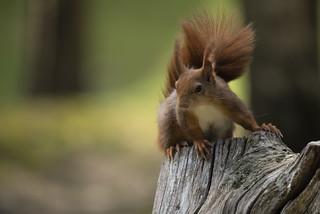 Do squirrels always look like superheroes