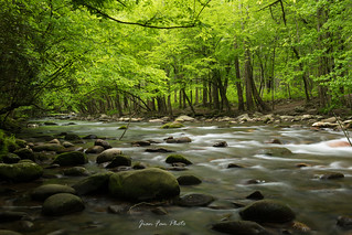 Forest and creek