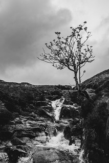 Lone tree (by a mountain gill)