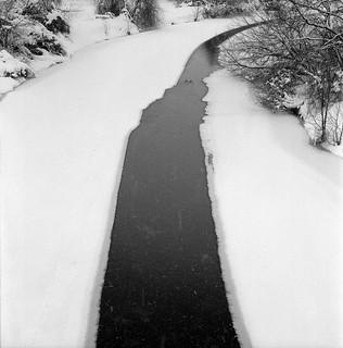 Winter bird water road.