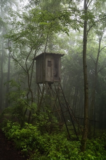 hunting stand in the fog