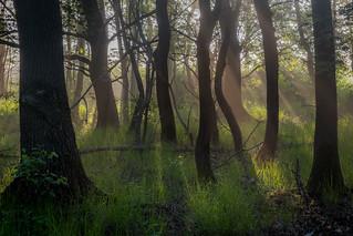 Illuminated Woodland