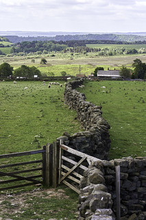 Curvy dry stone wall