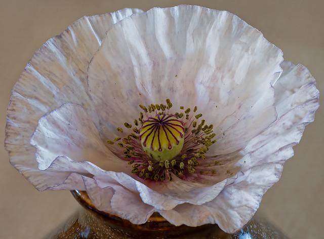 poppy - 28 photo stack