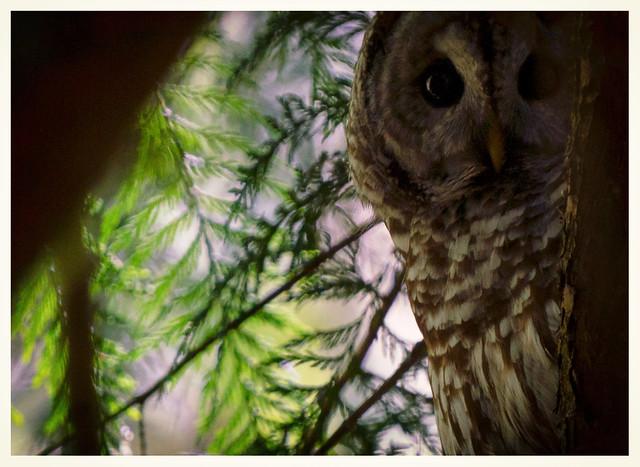 Photo:I heard the wings... By marneejill