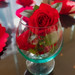 Red rose in a glass.  784a