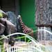木柵動物園31