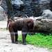 木柵動物園46