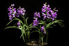 Photo:Ponerorchis graminifolia var. kurokamiana '#3041' (Hatus. & Ohwi) T.Hashim., Proc. World Orchid Conf. 12: 119 (1987). By sunoochi