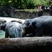 木柵動物園18