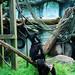 木柵動物園39