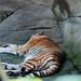木柵動物園21