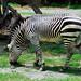 木柵動物園29
