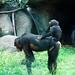 木柵動物園36