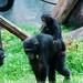 木柵動物園37