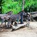 木柵動物園25