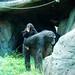 木柵動物園34
