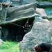 木柵動物園43