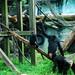 木柵動物園38