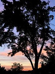6.17.21. Sunset