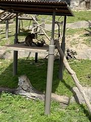 Zoo trip April 2021