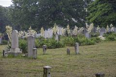 Cemetery Rain, Sandy Ground