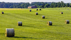 Early morning: Bales of grass hay