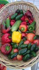 Today's Harvest 7-18-21