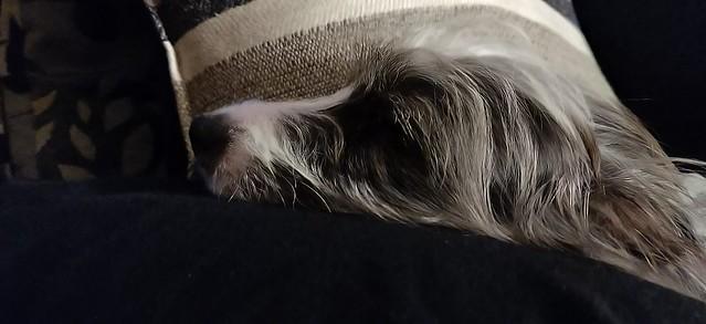 Meet Josie!