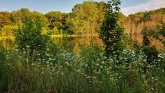 Mabbott Pond Evening Scene