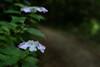 Photo:20210612 Nishio Wildlife Sanctuary 2 By BONGURI
