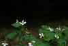 Photo:20210612 Nishio Wildlife Sanctuary 3 By BONGURI