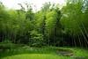Photo:20210612 Nishio Wildlife Sanctuary 4 By BONGURI