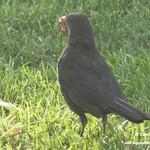 Aves en la Glorieta y el Paseo del Norte. La Guardia (Toledo) Julio 2021