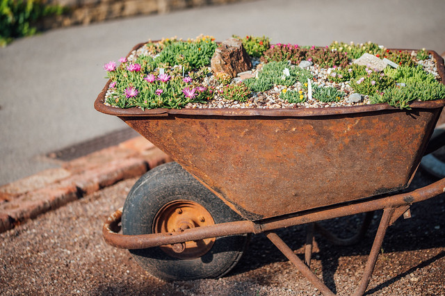 Rusty wheelbarrow used as a pot for different kinds of flowers