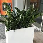 Interior Plant Services Miami