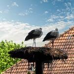 2021 07 07 Insel Föhr, Storchen-Hof 01