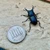 Photo:#stagbeetle #くわがたむし #クワガタムシ #kuwagata #クワガタ #昆虫 #insect #虫 #bug #Japan #日本 #千葉県 #Chibaken #柏市 #柏 #Kashiwa #ivvaDOTinfo #ivva By ivva