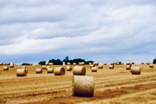 Harvest in Ireland