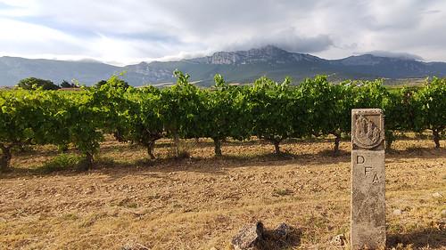 Viñedos cerca de San Vicente de la Sonsierra