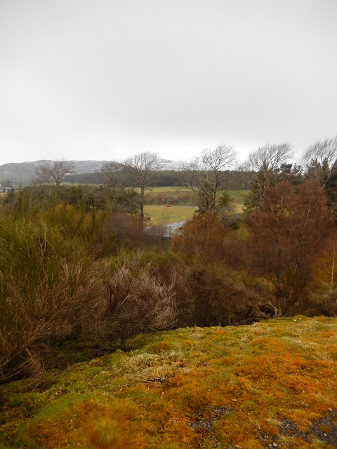 Photo:Bushes and the A86 seen from Witches Hill, Kingussie, 2021 May 06 By Dunnock_D