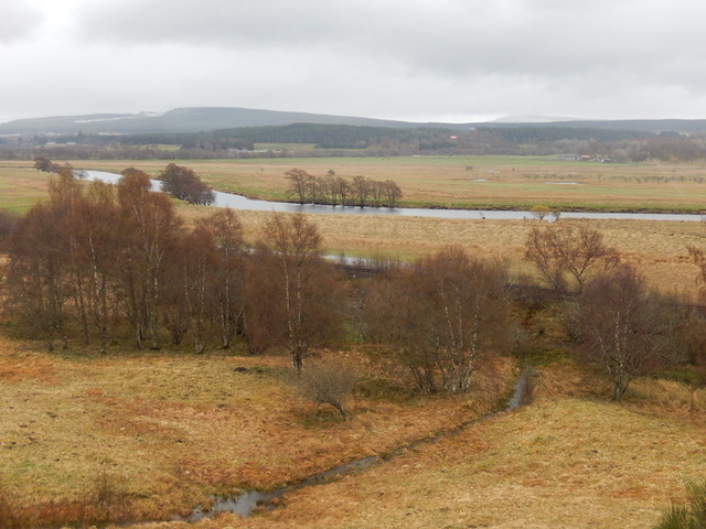 Photo:Birch-trees and the river Spey, 2021 May 06 By Dunnock_D