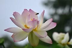 Aug 2021 Kenilworth Lotus 3