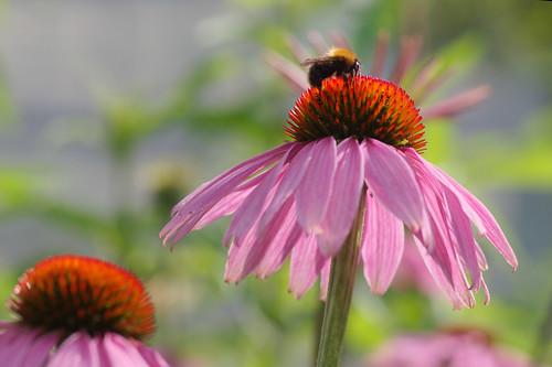 20210720 zomer bloemen en bijen [jan vonk]12